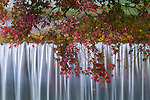 The sound of water abounds in the beautiful temple gardens of Kyoto. The rigorous symmetry of the cascade of this small waterfall is softened by an overhanging maple. Kyoto, Japan