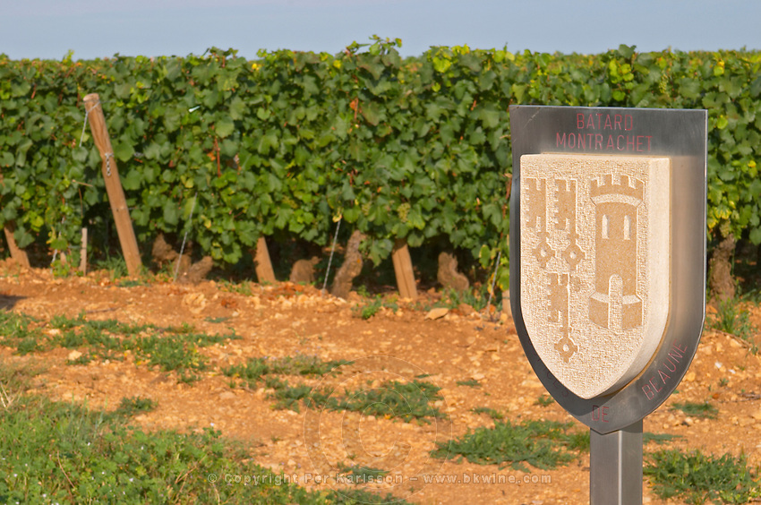 """Vineyard. Batard Montrachet, Hospices de Beaune. """"Le Montrachet"""" Grand Cru, Puligny Montrachet, Cote de Beaune, d'Or, Burgundy, France"""