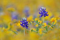 Texas Wildflowers Portfolio