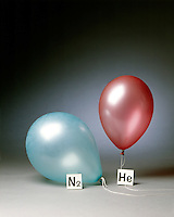 HELIUM &amp; NITROGEN FILLED BALLOONS (3 of 5)<br /> The Two Balloons After 20 Hours<br /> The helium filled balloon is smaller than the nitrogen filled balloon. Helium effuses out of the balloon faster than nitrogen.  Light atoms or molecules effuse through the pores of the balloons faster than heavy atoms or molecules.