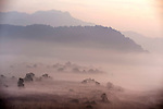 View at misty Morning Sunrise, Corbett National Park, Uttarakhand, Oldest National Park in India, named after Jim Corbett hunter turned conservationist, Northern India.India....