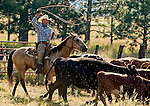 Cowboy Photography Workshop   Erickson Cattle Co. ..Tim Hansen.. Photo by Al Golub/Golub Photography