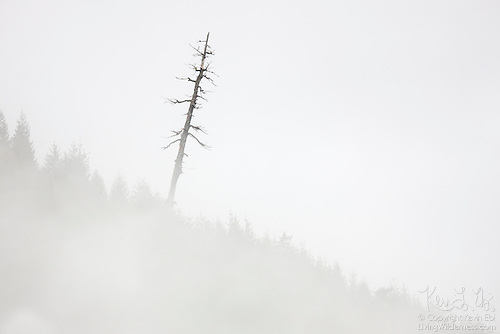 Leaning Snag, Jackman Ridge, North Cascades, Washington