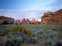 Dawn in the Devil's Kitchen section in the Needles District of Canyonlands National Park. Utah.