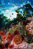 Underwater British Columbia