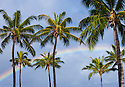 Rainbow and coconut palm trees over Pearl Harbor; Honolulu, Oahu, Hawaii