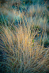 Dry grasses in the Valle Vidal. Northern New Mexico near the village of Amalia.