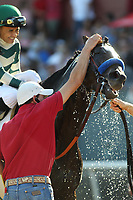 HOT SPRINGS, AR - MARCH 18: Jockey Mike Smith gives Mor Spirit a wet towel bath after winning the Essex Handicap race at Oaklawn Park on March 18, 2017 in Hot Springs, Arkansas. (Photo by Justin Manning/Eclipse Sportswire/Getty Images)