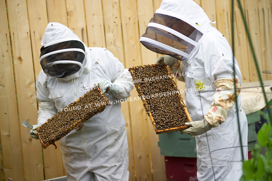 how to get rid of swarm of bees in garden