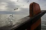 Colônia de pescadores Z16, na comunidade do Porto, em Santa Vitória do Palmar - Rio Grande do Sul.