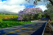 Springtime in Upcountry Maui