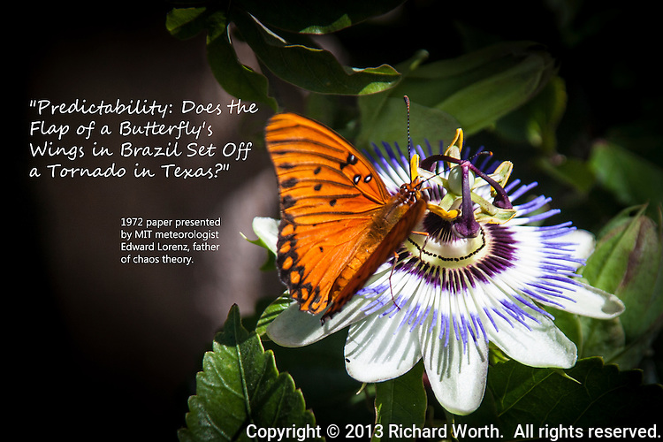 "A black and orange butterfly, perched on an exotic looking flower, with text regarding  chaos theory.  ""Predictability: Does the Flap of a Butterfly's Wings in Brazil Set Off a Tornado in Texas?""  1972 paper presented by MIT meteorologist Edward Lorenz, father of chaos theory."