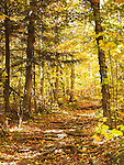 Fall nature scenery of a hiking trail in Killarney Provincial Park, Ontario, Canada