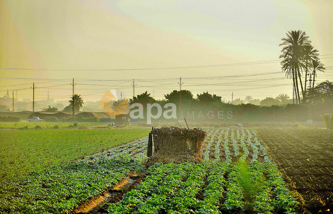 A general view show of the field in Birqash outside of Cairo, Egypt, Sept. 30, 2015. Photo by Amr Sayed