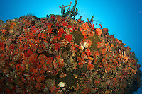 Coral growth on the hull of an artificial reef