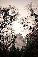 Yosemite Falls through the trees in evening