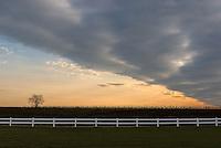 &quot;Geometree&quot;<br /> Farm Field Sunset<br /> Riverhead, Long Island