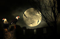 Vultures on ruins at night, during a full moon