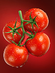 Fresh juicy appetizing tomatoes on the wine sprayed with water. Cluster tomatoes.