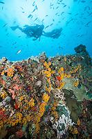 Wreck of The General Rogers.U.S. Virgin Islands