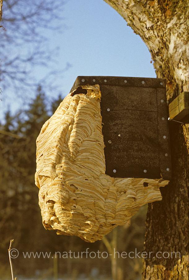 Nest in einem Vogelnistkasten, ist so groß geworden, dass es nach außen erweitert werden musste