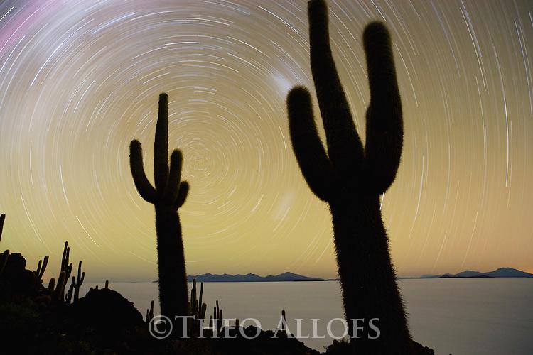 Bolivia, Altiplano, Salar de Uyuni, world's largest salt flat; rare cacti (Echinopsis tarijensis) on Isla Inkahuasi with star trails, long night exposure