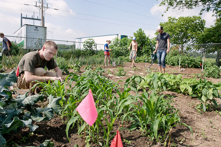 Jon Stevenson, an Junior English Major, removes weeds from his corn Thursday in the organic garden.