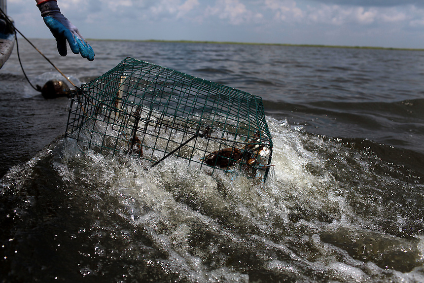 Deck hand Derrick Bennett reaches for a crab pot on Lake Amedee in St Bernard Parish, LA on May 26th, 2010. Local fisherman from St Bernard Parish were desperately fishing the surrounding bayou to earn as much income as possible before authorities shut down the crab fishing while the BP oil spill inched closer.