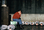 Sitting in the morning sun, a tired worker yawns at Tsukiji Fish Market in Tokyo, Japan where a skilled army of licensed middlemen and buyers purchase tuna and a variety of seafood for sale in the market's 1,400 shops. Because of the Japanese passion for freshness, all the fish sold will be consumed by Tokyo residents the following day. (Jim Bryant Photo)......