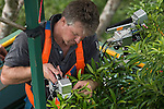 Up on top of the Daintree rainforest canopy, JCU Post Doctorate Dr. Raymond Dempsey does a comparative study of photo-protective responses in the leaves of tropical trees during a wet-dry seasonal transition. He takes pre-dawn, mid-day and afternoon measurements with highly complex scientific instruments that measures levels of photosynthesis as well as collects leaf disks to take back to the lab for futher studies.