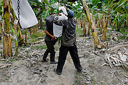 Young Colombian workers hanging up a bunch of bananas on the aircable on the banana plantation in Aracataca, Colombia, 14 March 2006. Eighty percent of the exported bananas in the world are grown in Latin America. Local farms have no other alternative than to sell for a price offered by the multinational company. When working conditions and ecology is in question, the corporations do not have any responsibility as they do not own plantations. Local governments in the attempt of organizing banana export provide low duty taxes on export, they try to eliminate social and enviromental politics to attract the big companies to their countries.