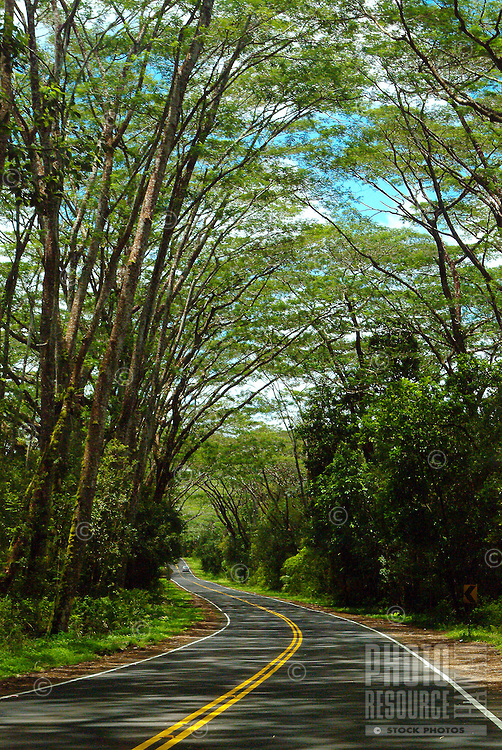 Scenic road, Highway 132, lined with trees on the way to Kapoho, Big Island