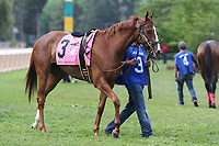 HOT SPRINGS, AR - April 14: Stellar Wind #3 walks in the infield paddock prior to the Apple Blossom Handicap at Oaklawn Park on April 14, 2017 in Hot Springs, AR. (Photo by Ciara Bowen/Eclipse Sportswire/Getty Images)