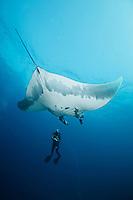 QT1930-D. Manta Ray (Manta birostris) and scuba diver. Baja, Mexico, Pacific Ocean.<br /> Photo Copyright &copy; Brandon Cole. All rights reserved worldwide.  www.brandoncole.com