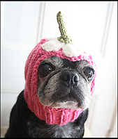 BNPS.co.uk (01202 558833)<br /> Pic: JessicaFurtado/BNPS<br /> <br /> ***Please use full byline***<br /> <br /> Daisy hat<br /> <br /> Barking mad entrepreneur Jessica Lynne has set tails wagging after launching her own fashion line for pug dogs. The 22-year-old's hand knitted hats and costumes transform the cute canines into characters such as a ladybird, an alien, an aviator, Batman and even Minnie Mouse. Dog-mad Jessica was inspired to launch her canine couture after knitting her adopted pug a wacky hat to keep him warm through cold winters. The Snuggly Pug Alien hat was such a hit with fellow pug owners she founded her company All You Need is Pug while still studying for a university degree in English. Her crazy creations have also had the thumbs up from the dinky dogs themselves, who are happy to parade them with pride.