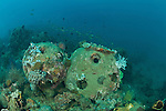 Artificial reef balls about 10 years old underwater with some encrusting corals.