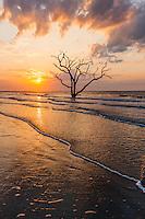 The sun rises over a lone dead oak tree on the beach in Botany Bay Plantation WMA on Edisto Island, South Carolina.