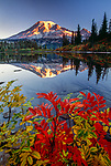 Mt. Rainier reflected in the calm waters of Bench Lake, with mountain ash turning brilliant red in early fall.  Mt. Rainier National Park, Washington, USA