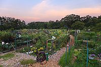 The sky lightens just before sunrise at the Newark Street Community Garden in Washington, DC.