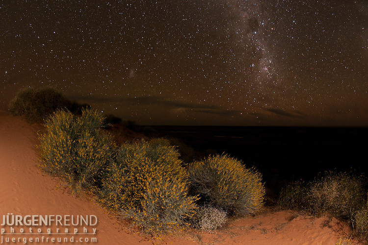 The Milky Way star studded sky and the wildflowers growing in the sand dunes of the Simpson Desert. The Simpson Desert is a large area of dry, red sandy plain and dunes in Northern Territory, South Australia and Queensland in central Australia.[1][2][3] It is the fourth largest Australian desert, with an area of 176,500 km² (68,100 sq mi).
