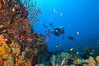 Sam diving at Seamount.St. Croix.U.S. Virgin Islands