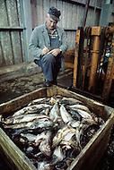 Nova Scotia, Canada, 1967. Fisherman in Peggys Cove with mackerels.