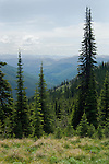 Cabinet mountains from Clifty trail in north Idaho