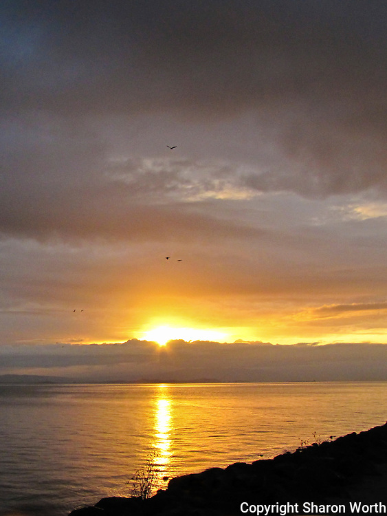 Birds, little more than dots aginst the clouds, take to the air along the western shore of San Francisco Bay, flying toward the rising sun.