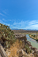 Prickly Pear growing on ledge of Canyon cliff in the Santa Elena with the Rio Grande River in view below in a vertical format.