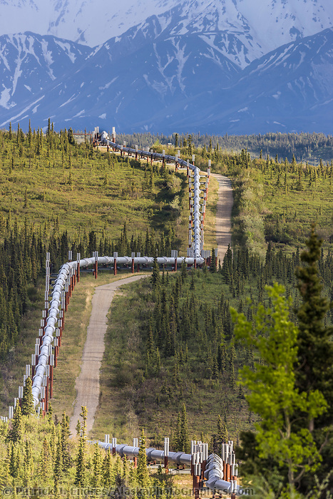 Trans alaska oil pipeline traverses tundra in the Alaska range, interior, Alaska