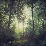 Forest in early morning light with rising fog - texturized photograph