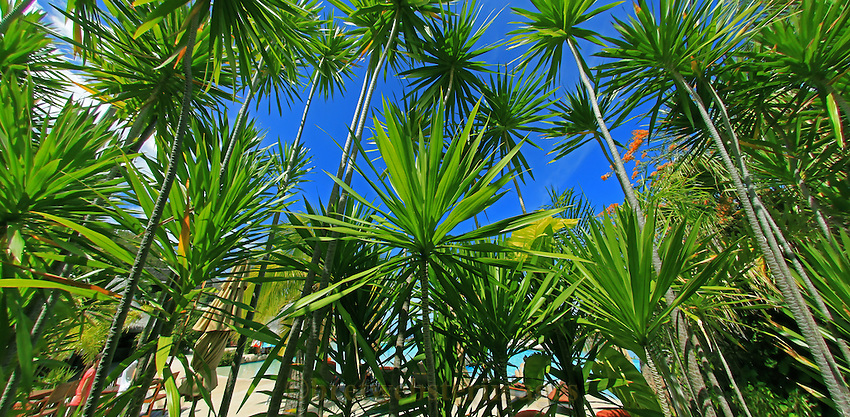 Lovely Tahitian Foliage