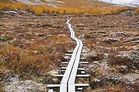 Wooden walkway through empty landscape with autumn snow, Kungsleden trail, Lapland, Sweden
