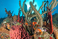 Reef scenic<br /> Carabinero dive site, Isla Mona